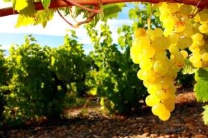 visite domaine viticole conciergerie privée var provence