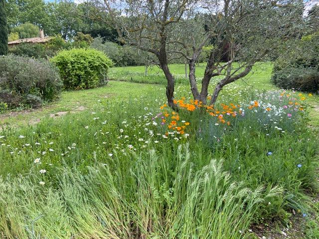 Entretien de votre jardin par conciergerie arma prestige var